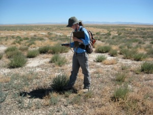 Researcher Erin Gray studying forage kochia in southern Idaho